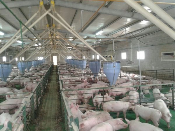 Rejas para destete de cerdos